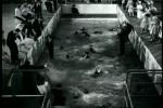 Banho coletivo na piscina