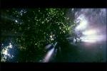Raios solares vazam pelas árvores
