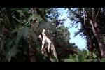 Bond imitando Tarzan
